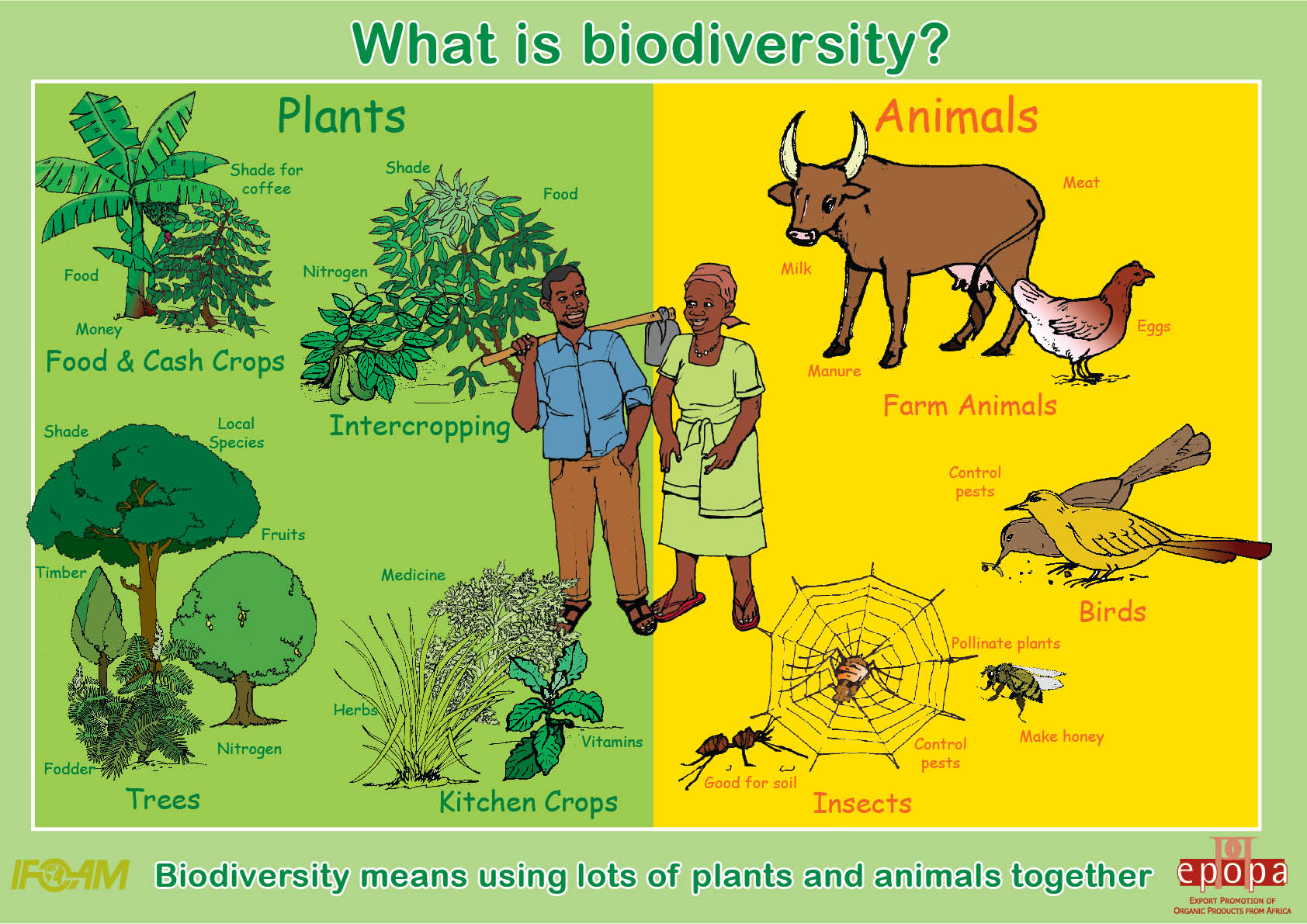 what is the relationship between plants and animals on earth
