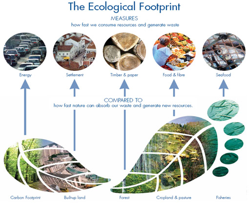 importance of the ecological footprint A person's ecological footprint - or that of a business, a town, a country, an industry etc - is the amount of non-renewable natural resources that they use and their impact on the environment.