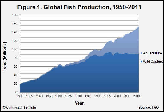 Aquaculture Tries to Fill World's Insatiable Appetite for Seafood