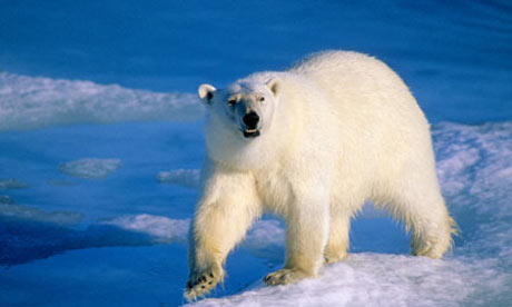 Arctic oil rush will ruin ecosystem, warns Lloyd&#039;s of London