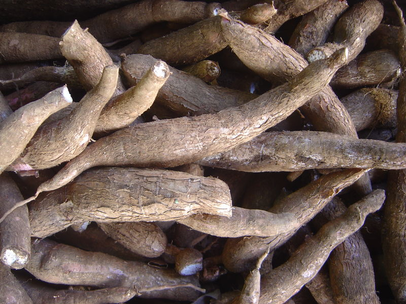 Cassava 'offers climate change hope' for Africa